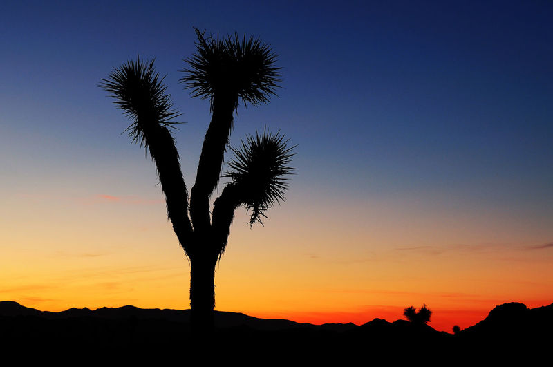 Joshua Tree Sunset Desert Joshua Tree National Park National Park Sunset Silhouettes Beauty In Nature Blue Sky Clear Sky Day Joshua Tree Low Angle View Nature No People Outdoors Palm Tree Red Sky Scenics Silhouette Sky Sunset Sunset Tree Sunsets Tranquil Scene Tranquility Tree Tree Sunset California Dreamin The Creative - 2018 EyeEm Awards
