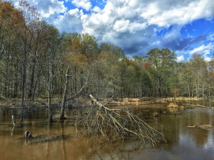 Fallen Trees Pond Marshes Swamp Park Spring Day Spring EyeEm Nature Lover Nature