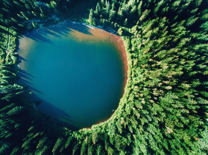 Birds Eye View Birds Of EyeEm  Drone  Mt Hood Vacations Beautiful Destinations Hikingadventures Nature Photography Camping PNWonderland Oregonexplored Water Nature Beauty In Nature Plant Green Color Tree High Angle View Sunlight Scenics - Nature Outdoors Directly Above