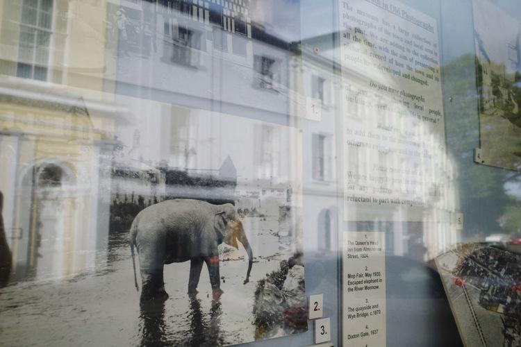 An elephant,