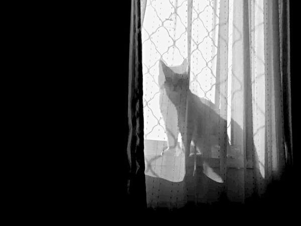 The curious Cat Cat On The Window Cat Lovers Cats Of EyeEm Black And White Light And Shadow Cute Pets IPhoneography Taking Photos Creative Light And Shadow