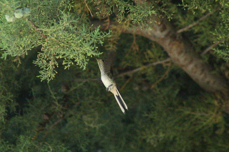 Bird flying over a tree