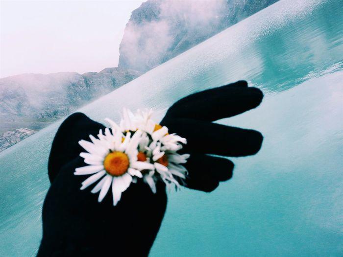 Enjoying Life Mountains Lake View Hikingadventures Flower Discover  First Eyeem Photo