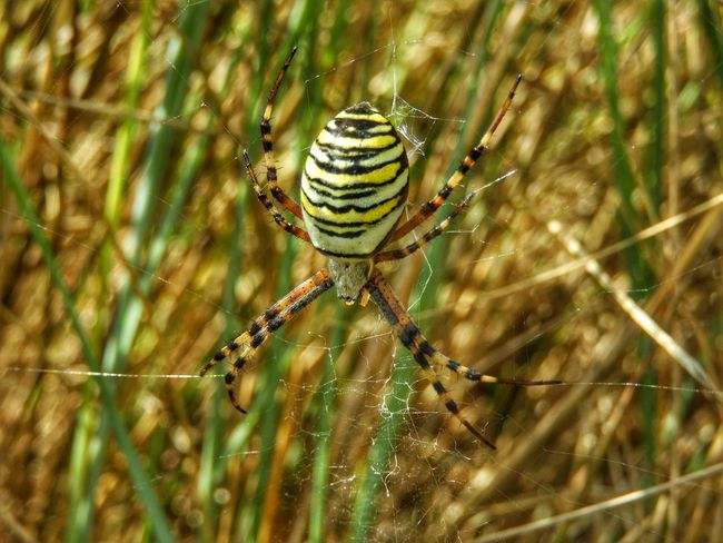 One Animal Spider Web Animals In The Wild Spider Insect Animal Themes Animal Wildlife Focus On Foreground Close-up Nature Web Survival Day No People Animal Leg Outdoors Complexity Trapped Full Length Fragility wasp spider