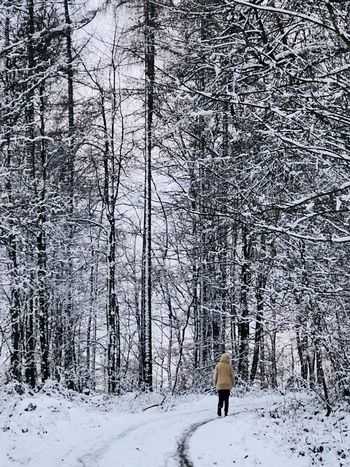 Spazieren Wälder Schnee Winter Spazieren Wälder Snow Cold Temperature Tree Nature Walking One Person Adults Only People One Man Only Day Forest Outdoors Full Length Beauty In Nature Warm Clothing Adult City The Fashion Photographer - 2018 EyeEm Awards