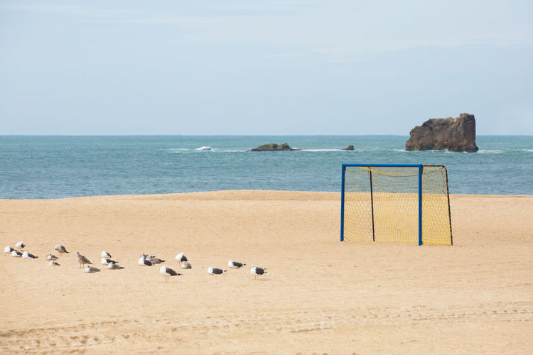 Seagulls Animal Animal Themes Beach Beach Soccer  Beauty In Nature Day Empty Goal Group Of Animals Horizon Horizon Over Water Land Nature No People Outdoors Rocks And Water Sand Scenics - Nature Sea Sky Soccer Soccer Goal Tranquil Scene Tranquility Water