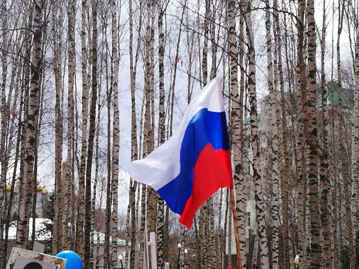 Flag Tree Patriotism Day Outdoors No People Nature Sky Victory Day Russia 9 May 2017