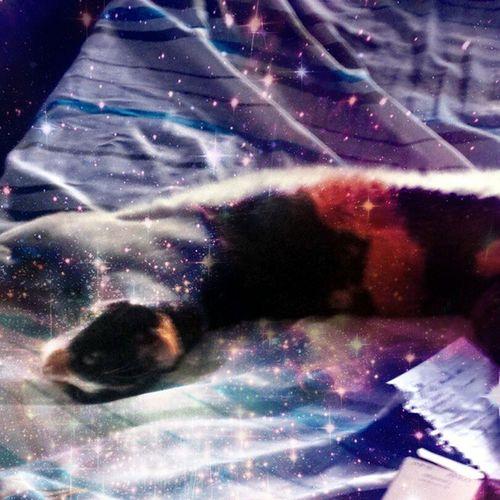 Meus gatos sonolentos. 1 Bed Sleeping Preguica