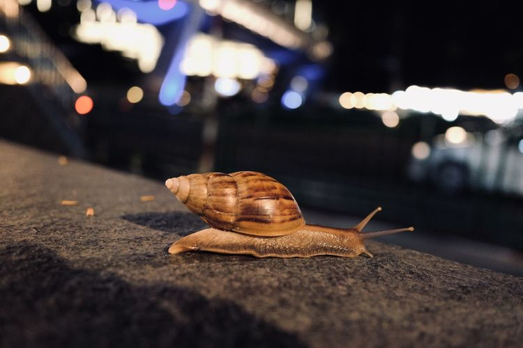Close-up of snail on illuminated city at night in the city