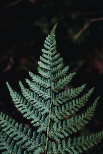 Fern leaf on dark background