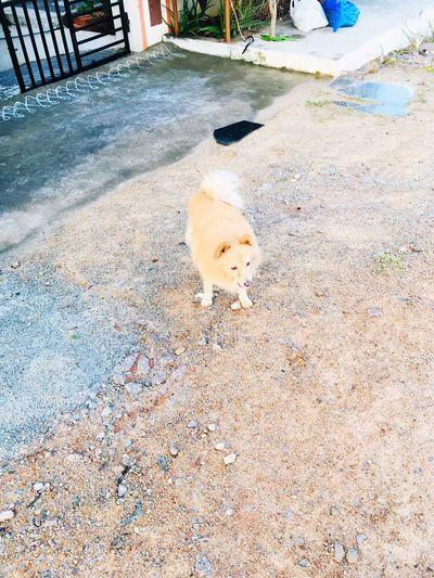 Doggie Animal