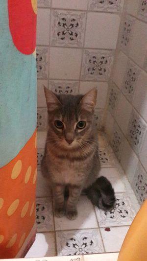 Gato Cat Jodie Ducha Miau