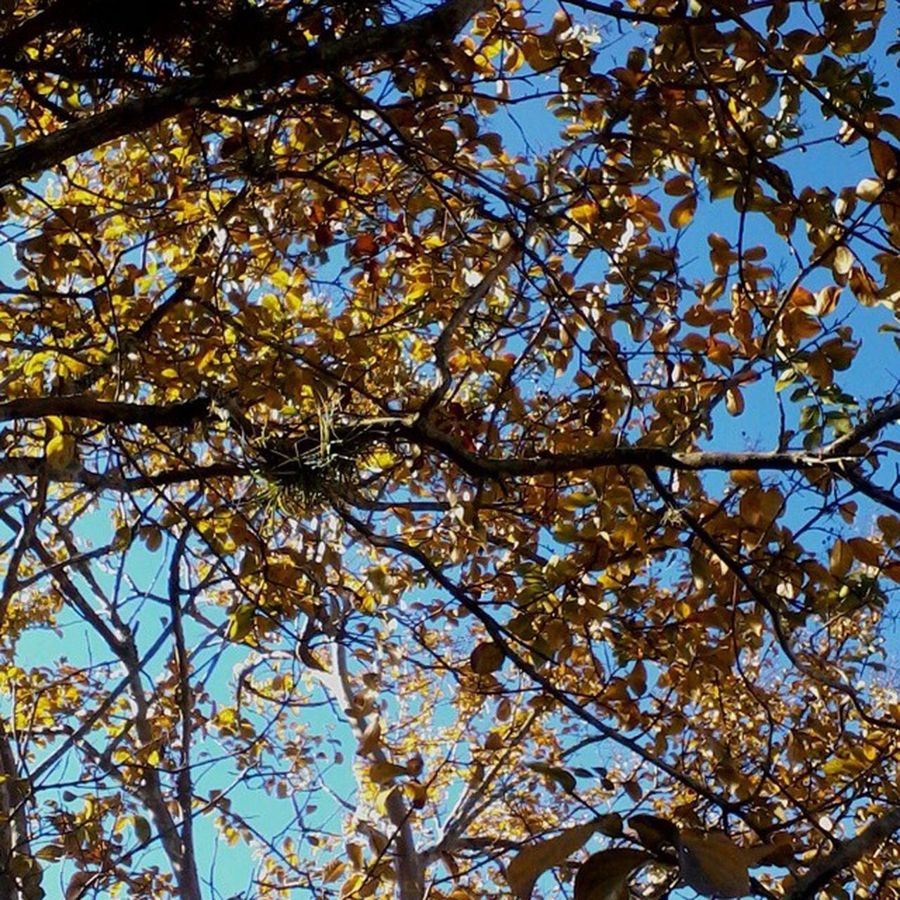tree, low angle view, branch, growth, nature, beauty in nature, leaf, autumn, sky, change, tranquility, sunlight, yellow, day, outdoors, season, no people, tree trunk, clear sky, flower