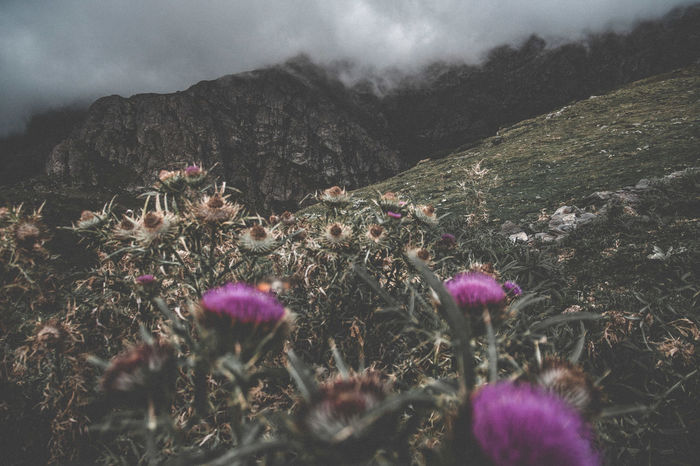 One amazing trip with friend in central balkan. Bulgarian Nature Beauty In Nature Darktones Day Flower Forestbackground Landspace Moodyphotography Mountain Nature Outdoors Sky Wallpaper Background