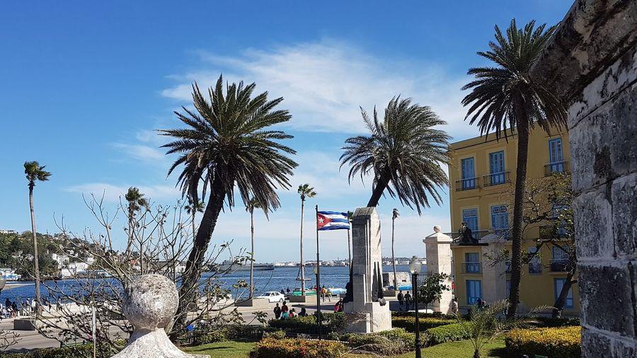 Caraibbean Architecture Caraibbean Trip Caraibeen_landscape Palm Trees Blue Sky Havana Old Town Cuban Flag Cubanlife