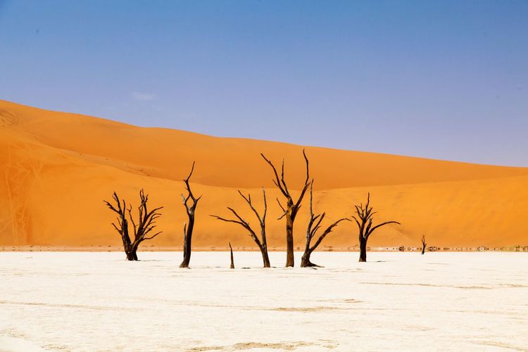 Nature Tranquil Scene Landscape Desert Arid Climate Scenics Remote Clear Sky Tranquility Sand Sand Dune Tree Outdoors Non-urban Scene Day Beauty In Nature Heat - Temperature No People Blue Bare Tree Collection Dessert Namibia Sand Dunes Traveling The Great Outdoors - 2017 EyeEm Awards