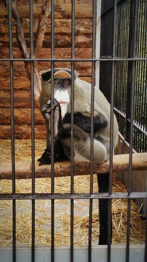 YaltaZoo One Animal Animal Themes Zoo