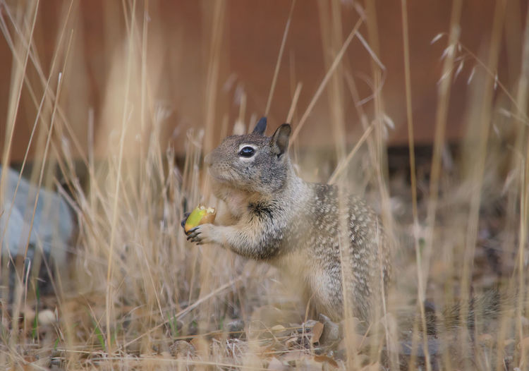#Nature  #Squirrel #forest #wildlife Animal Themes Animal Wildlife Nature One Animal