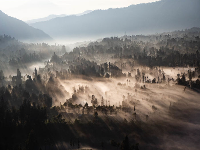 Sunrise view of mountains and clouds flowing between trees in east java, indonesia