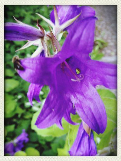 Seen on my morning walk Flower Flora Flo Mega  Sightseeing flowerforyou
