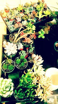 Flowers,Plants & Garden Succulents Plants 🌱 Plant Planting Plants And Flowers Plant Photography Gardening Gardens Landscaping Landscaping And Architecture Landscaping Fun