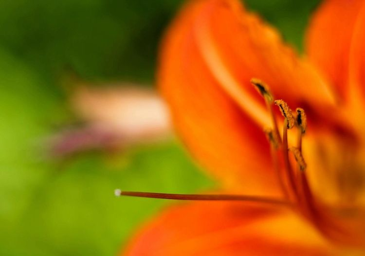 Insect One Animal Animal Themes Close-up Animals In The Wild Flower Animal Wildlife Nature No People Outdoors Beauty In Nature Fragility Day Flower Head