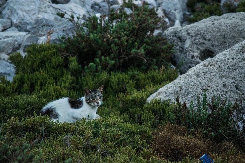 Animals In The Wild Beach Bestisland Greece Ixia Nikon Oldtown Palmtrees Restaurant Rhodes Greece Rhodos Kalathos