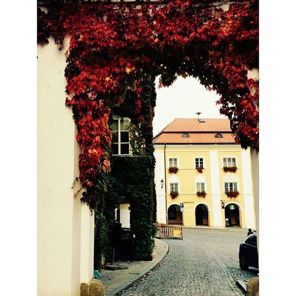 Beautiful autumn 😍🍃🍂🍁 Autumn Autumnweather Colorful Fall Falltimes Fallweather Instaautumn Instafall Instagood Leaf Leaves Nature Mikulov Southmoravia Loveit Beautifulday Beautifulplace Milujumoravu Vzilachnamproudimoravskakrev Mytadytotizmamevsechnoconasvetemasrad Slunceanekonecnyvinohrad