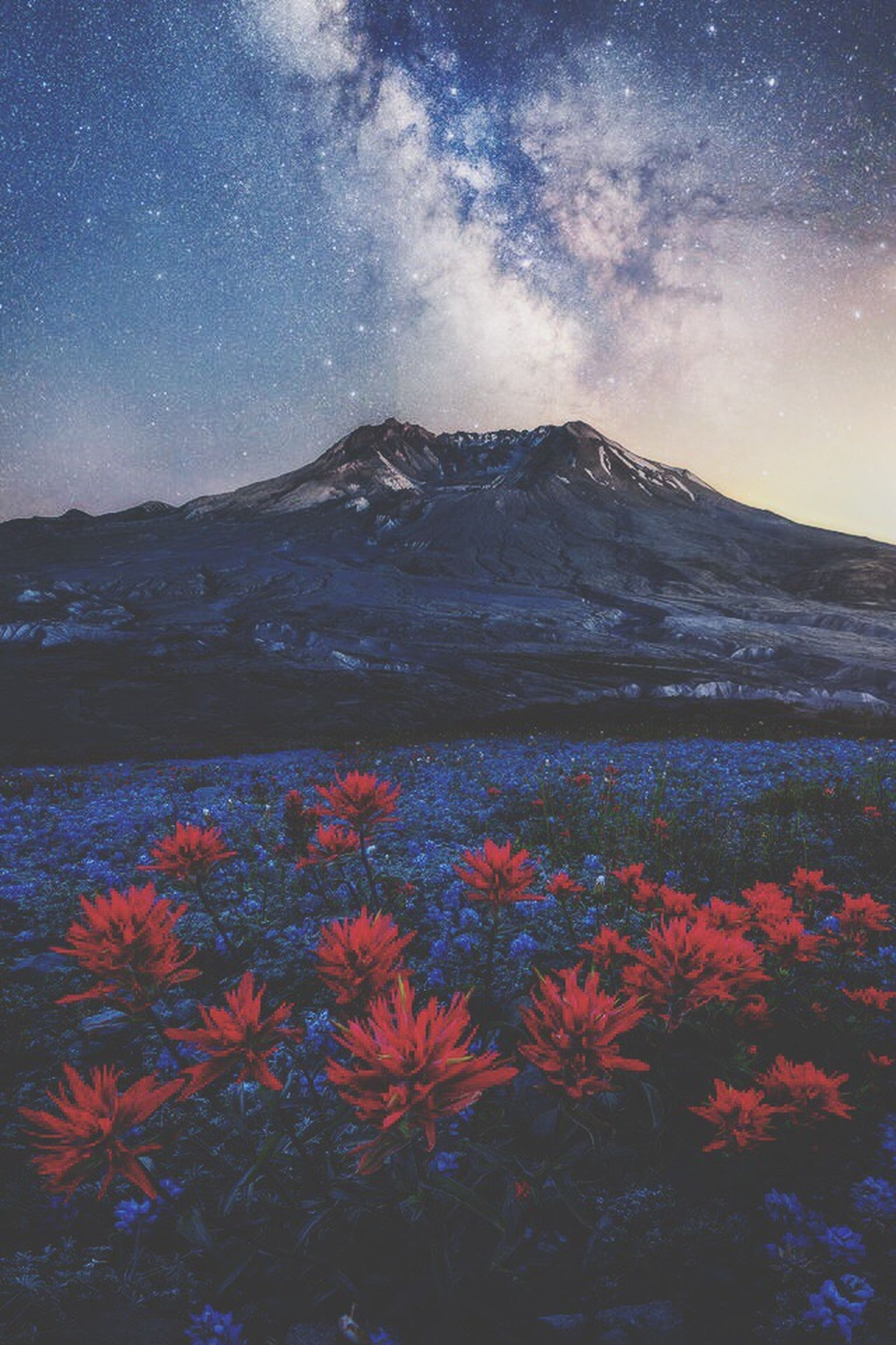 beauty in nature, nature, flower, mountain, scenics, tranquil scene, outdoors, sky, tranquility, plant, no people, landscape, day, star - space, water, freshness, flower head, galaxy
