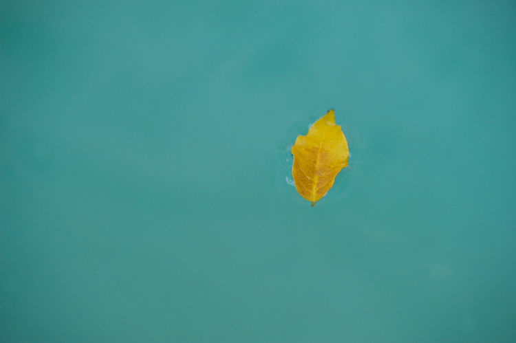 yellow in the blu Blu Colour Of Autumn Colour Of Nature Glance Leaf Minimal Nature Nature Photography Suspended Trieste Water Yellow Color Paint The Town Yellow