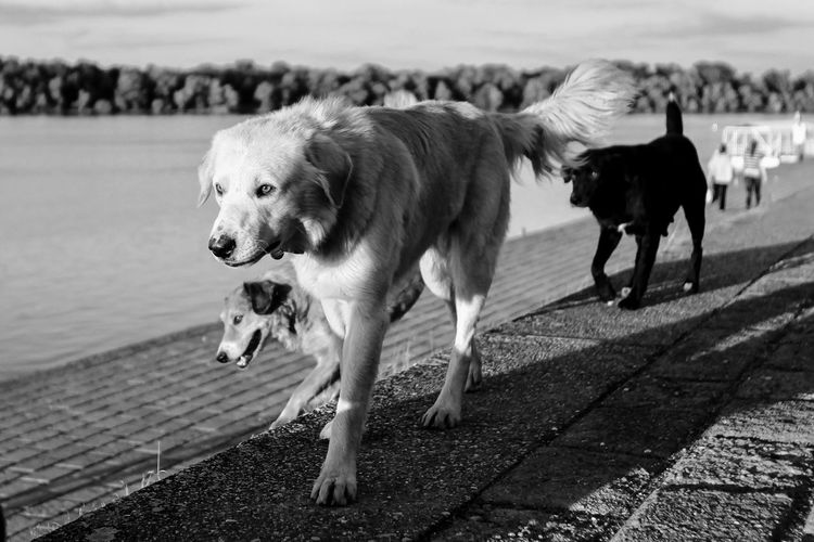 Pet Portraits Animal Themes Domestic Animals Mammal Focus On Foreground Outdoors Dog Day Pets No People Nature Close-up