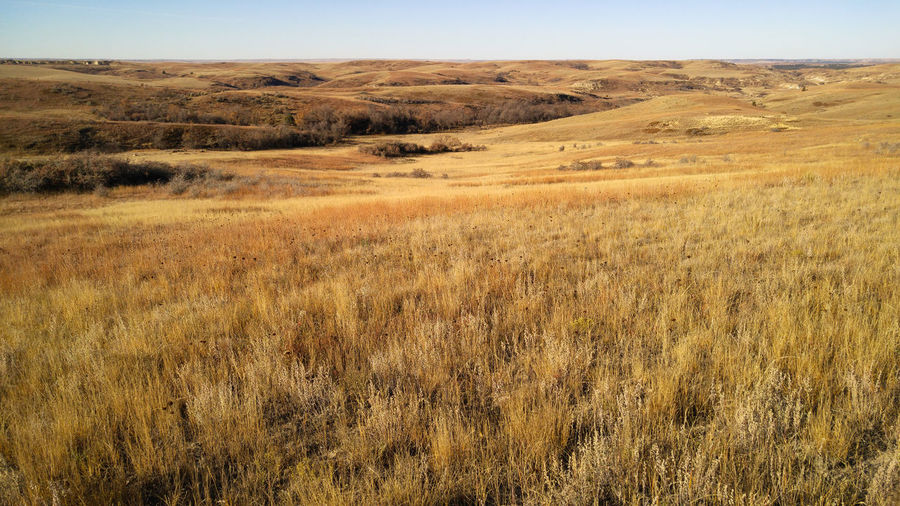 North Dakota Plains Prairie Grass Grassland Rolling Landscape Badlands Silence Solitude Wind Wilderness Empty Remote Horizon Over Land Tranquil Scene Landscape Environment Land Beauty In Nature Rural Scene Horizon Plain Outdoors No People Scenics - Nature