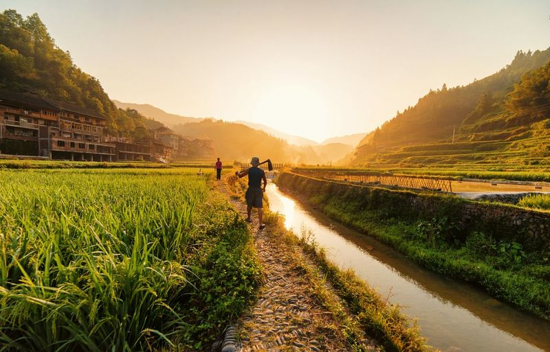 Farmers On Footpath Amidst Stream And Crops During Sunrise