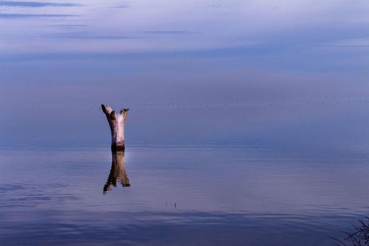 Driftwood Amidst Sea Against Sky At Dusk