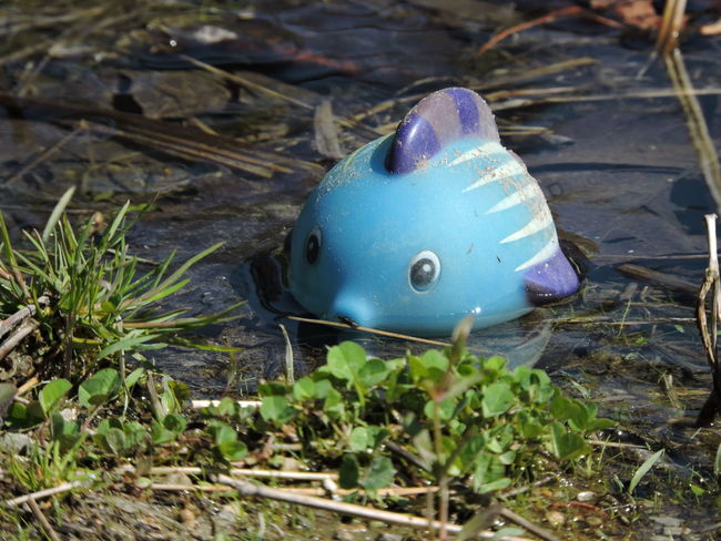 """""""I'm lost!"""" Lost in a puddle at the lake. Animal Themes Close-up Day Leaf Lost Toy Nature No People One Animal Outdoors Plant"""
