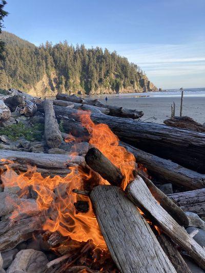 Wooden log on shore against sky