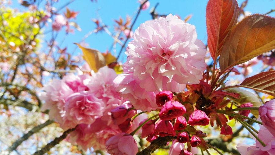 Low Angle View Of Flowers Growing On Tree