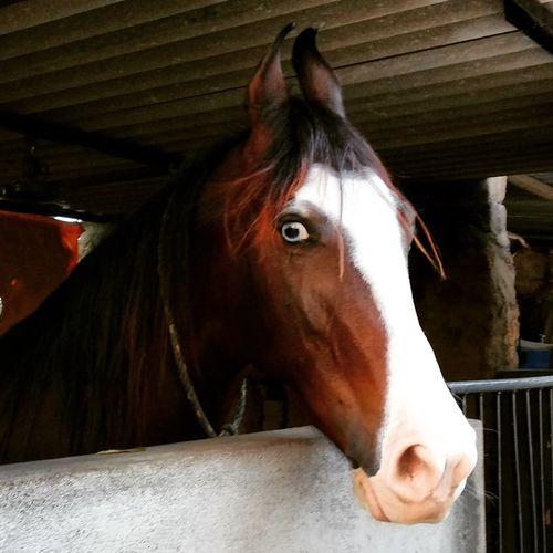 Horse Close-up Animal Animal Head  One Animal First Eyeem Photo