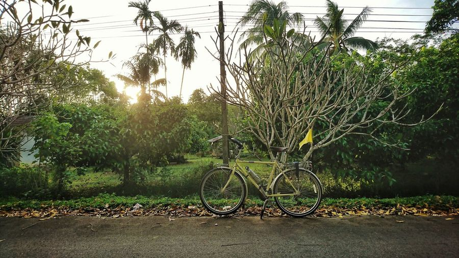 Bike for life Yellow Flag Bicycle Touring Evening Cycling Plumeria Road On The Way Tree Outdoors Day No People Sunlight Nature Growth