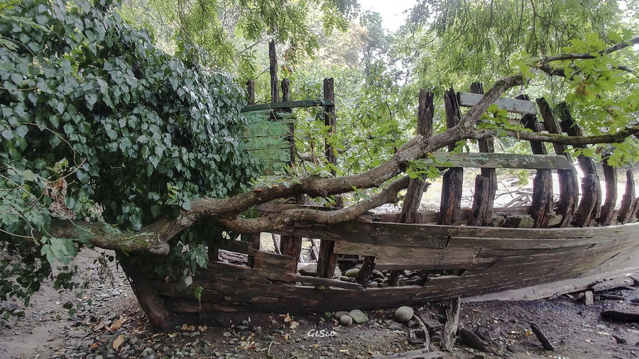 Ship Wreck Tree Plant Wood - Material Forest Nature Day No People Land Old Tranquility Abandoned Growth Wood Trunk Tree Trunk Damaged Outdoors Green Color Log Obsolete Deterioration