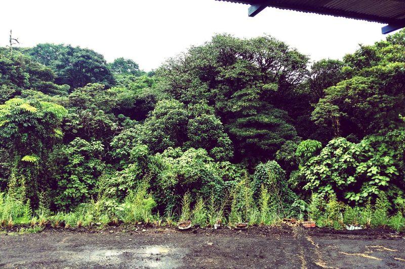 """""""Enseñame a pintar verde, así como Costa Rica lo hizo""""🍃🌿🌲🌳"""