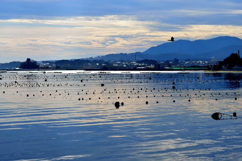 Kesennuma-bay Miyagi Japan Bird Atmosphere Sea ウミウ Japanese Cormorant