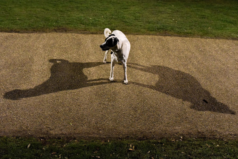 Dog with two shadows Dog Double Exposure Double Shadows East Coast Felixstowe, S Grass Night Shadow Street Photography Suffolk The Street Photographer - 2017 EyeEm Awards Pet Portraits