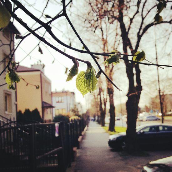 Wiosna WiosnaWMieście Zielono Mi City Tree Spring! My City Warsaw Poland Sky Day Outdoors Nature