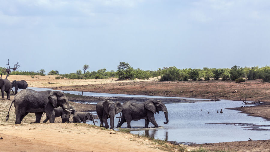 Elephant family at waterhole against sky