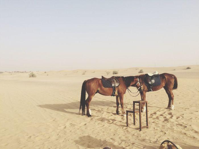 Horse on sand at beach against clear sky