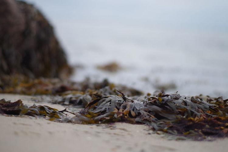 Close-up of dry leaf on beach