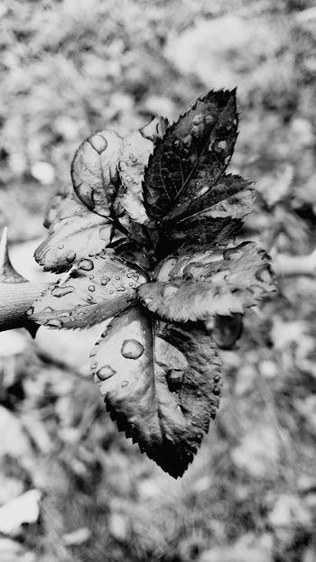 Nature Close-up Leaf No People Plant OutdoorsBlack & White This Week On Eyeem The Week On Eyem Eyem Gallery Popular On Eyeem New Talent Maybe? Day