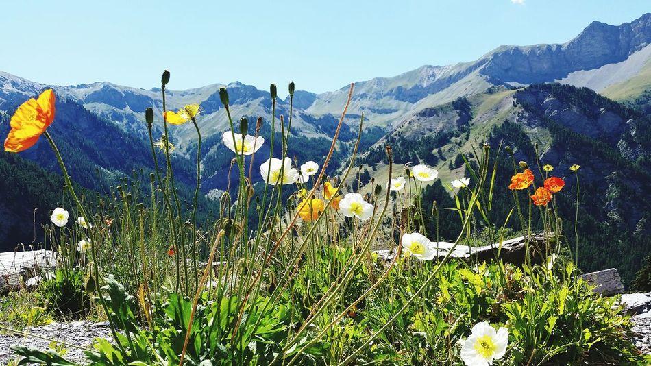 Mountain Queyras