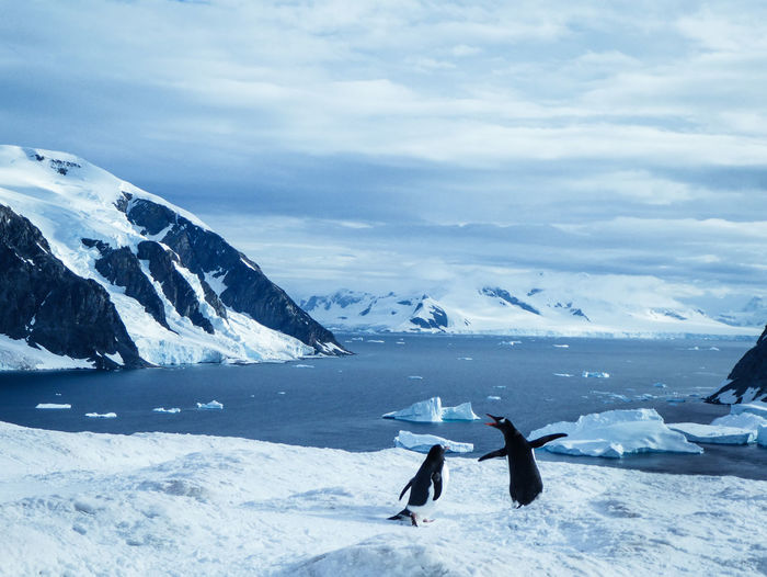 View of penguins against snowcapped mountain